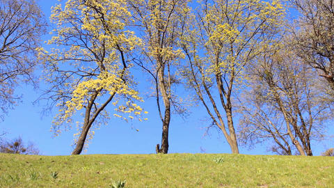 Spring Flowering Trees stock footage