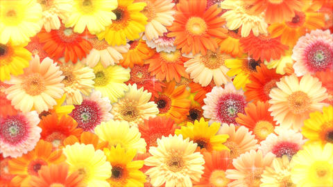 Pop Flower stock footage