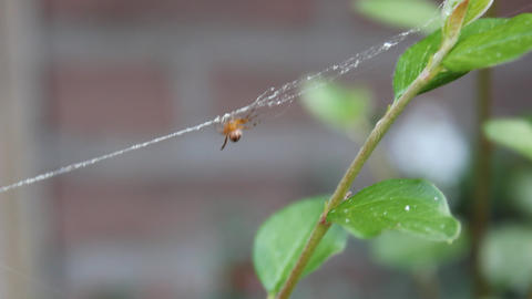 Tiny Spider Close Up stock footage