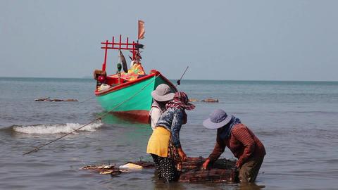 Merchants Crabs.