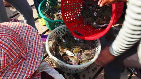 Merchants crabs Footage
