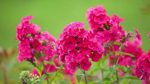 Red Flowers on the Defocused Background Footage