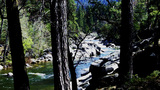 Sierra Nevada Mountain River Through Trees stock footage