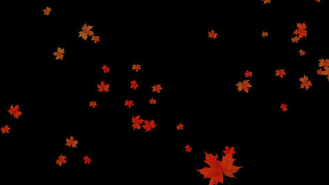 Maple Fall Background,autumn Composition Space stock footage