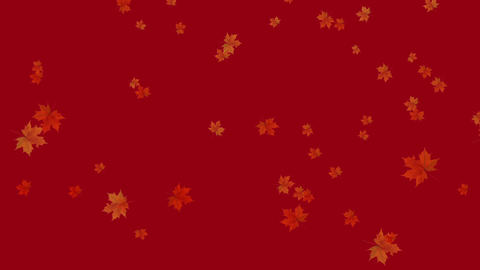 Maple fall background,autumn composition space Animation