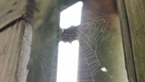 Horror Cobweb Static Shot stock footage