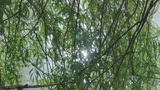 Sun Light Reflection Through Tree Branches stock footage