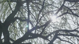 Revealing Sun Behind Tree stock footage