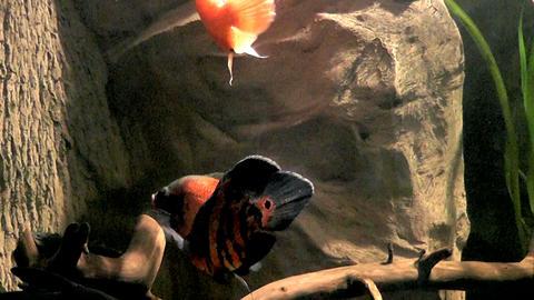 aquarium Footage