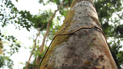 Jungle tree dolly Footage