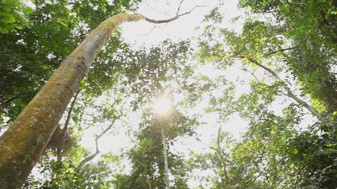 Jungle canopy tilt Footage