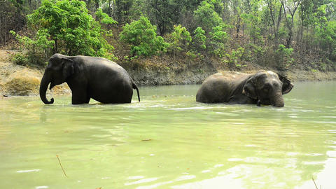 Bathing Elephants stock footage