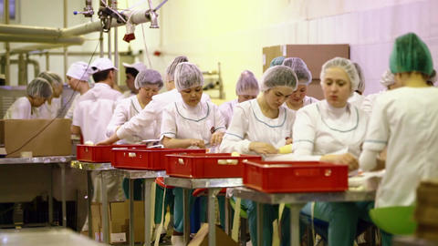 Busy workers at the factory Stock Video Footage
