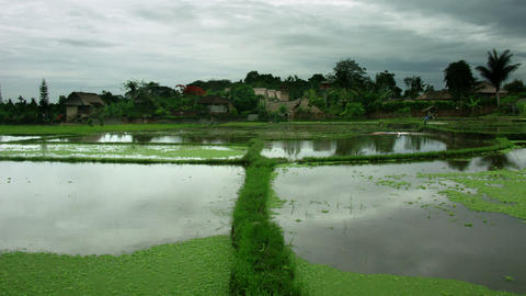Timelapse Bali field Footage