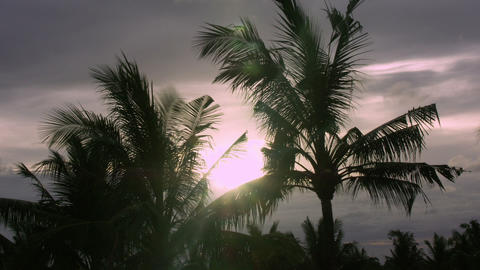 Timelapse Bali trees Live Action