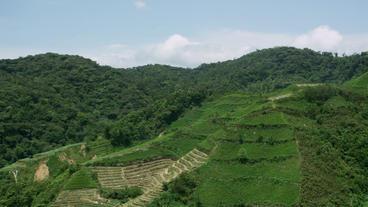 Timelapse padi hills Footage