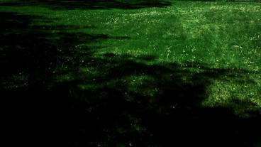 Timelapse Grass Shadows stock footage