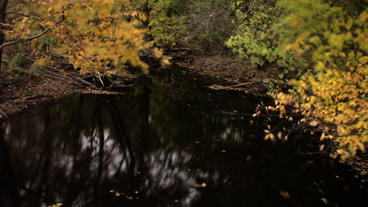 Timelapse Autumn River stock footage