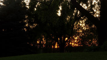 Timelapse Tree Sunrise stock footage