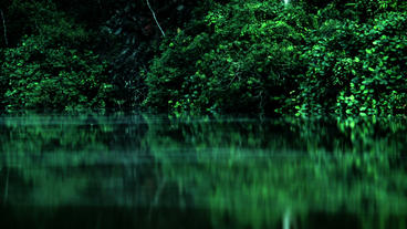 Timelapse Botanical Gardens swamp Footage