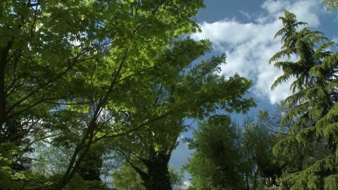 4K Beautiful Park at Spring 4 pan Footage