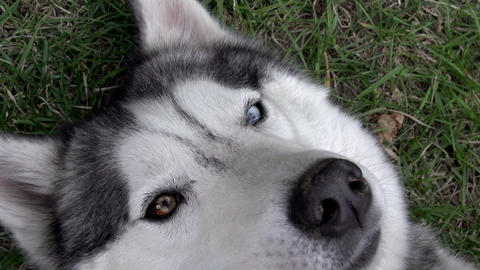 Pet Dog Footage