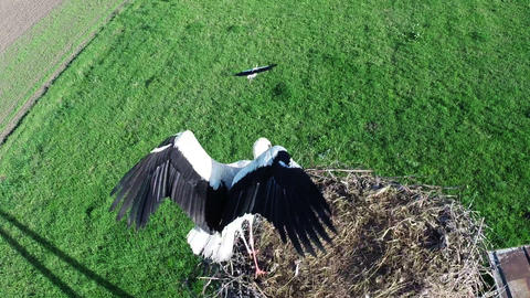 Flying over stork Footage