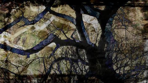 tree composite Stock Video Footage