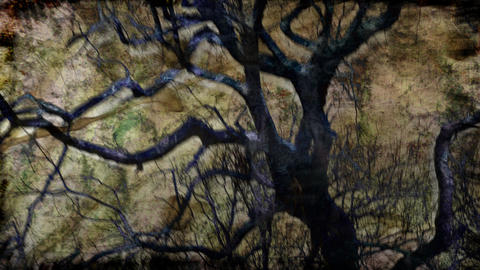 tree composite Stock Video Footage