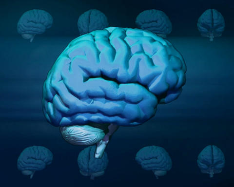 brain layers Stock Video Footage