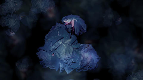 roses are blue Stock Video Footage