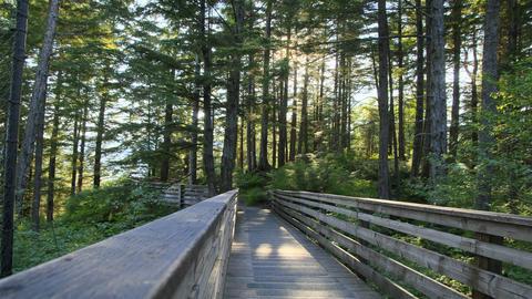 tree trail Stock Video Footage
