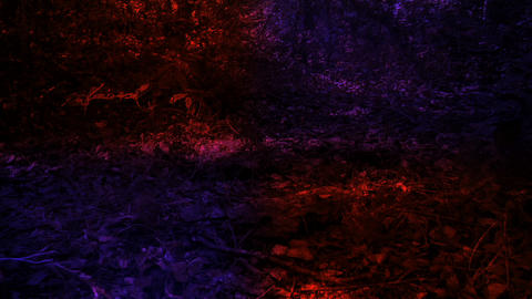 forest distortion Stock Video Footage