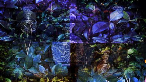 vase quad Stock Video Footage