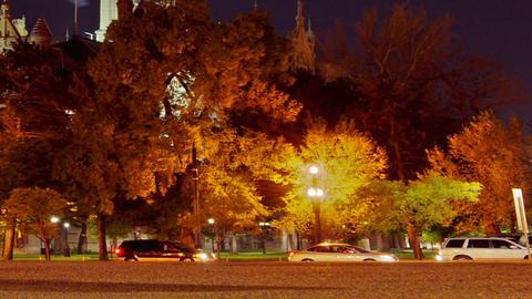 treeside traffic Stock Video Footage