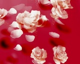 Rose Petals stock footage