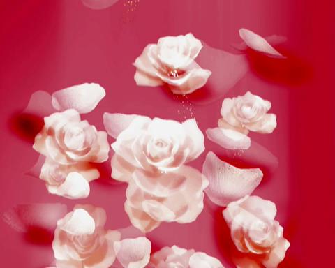 rose petals Stock Video Footage