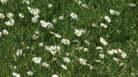 4K Spring Flowers Footage