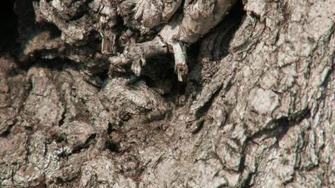 Ants on Tree Bark Spring Footage