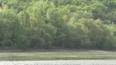 Continental Forest and River Danube 5 Footage