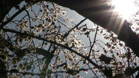 Mysterious Sunlight Shining through Leaves 4 Footage