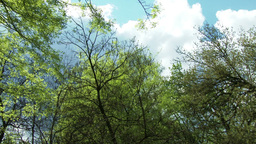 Springtime Forest 2 lowangle pan Footage