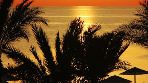 beautiful landscape with palms and sea during sunr Footage