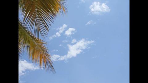 Caribbean Beaches 3