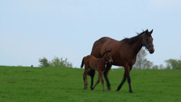 Mare and Foal A Footage