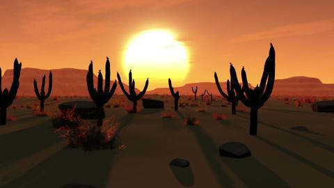 Desert Saguaro Cactus Field 1 stock footage