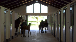 Mares And Foals stock footage