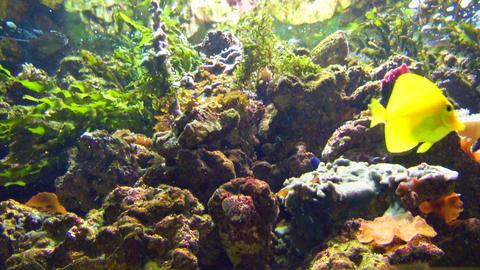 aquarium 01 Footage