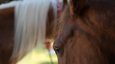 Horse, Head Closeup (Animals) Footage