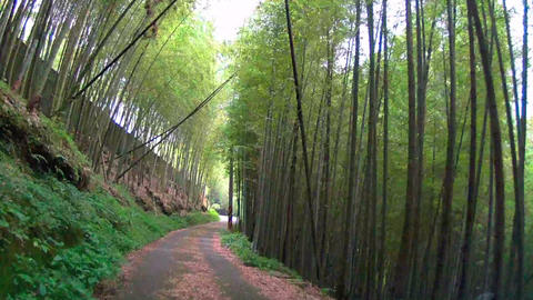 Driving through the bamboo forest at summer time Footage